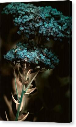 Blue Bouquet Canvas Print by Bonnie Bruno