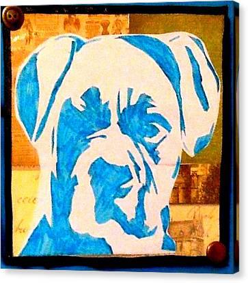 Blue Boxer Canvas Print by Ashley Reign