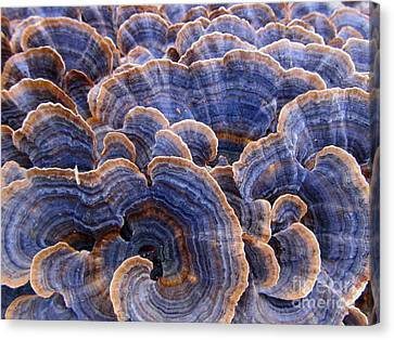 Blue Bracket Macro Canvas Print