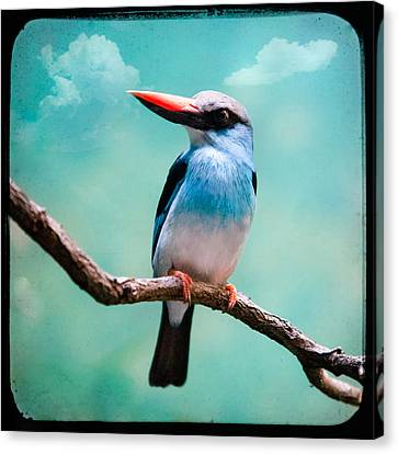 Blue Breasted Kingfisher Canvas Print by Gary Heller