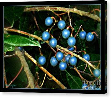 Canvas Print featuring the photograph Blue Bush Berries  by Leanne Seymour