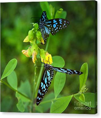 Blue Butterflies In The Green Garden Canvas Print by Regina Koch