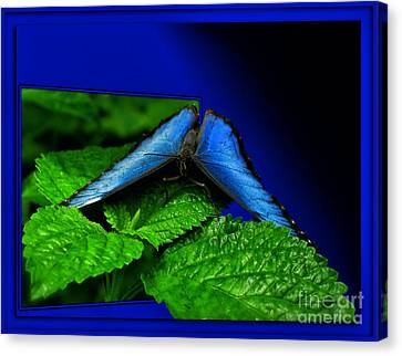 Blue Butterfly 02 Canvas Print by Thomas Woolworth
