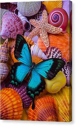 Blue Butterfly Among Sea Shells Canvas Print by Garry Gay