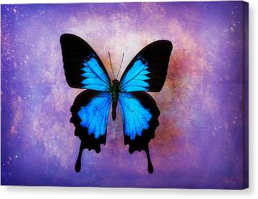 Blue Butterfly Dreams Canvas Print by Garry Gay