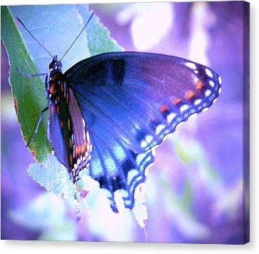Blue Butterfly Canvas Print by Shirley Moravec