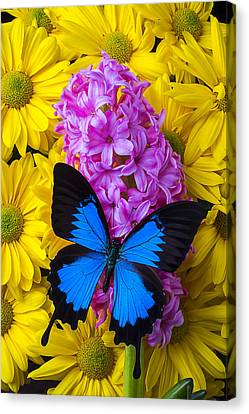 Butterflies Canvas Print - Blue Butterfly With Hyacinth by Garry Gay
