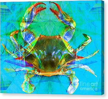 Blue Crab 20140206v2 Canvas Print by Wingsdomain Art and Photography
