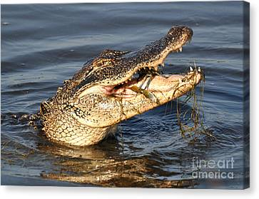 Canvas Print featuring the photograph Blue Crab Tar-tar by Kathy Baccari