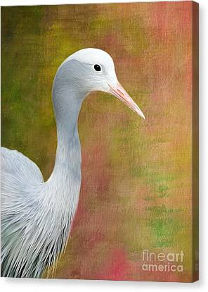 Blue Crane Canvas Print