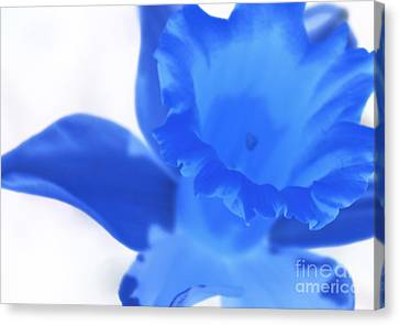 Canvas Print featuring the photograph Blue Daffodil by Andy Prendy