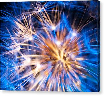 Blue Dandelion Up Close Canvas Print by Todd Soderstrom