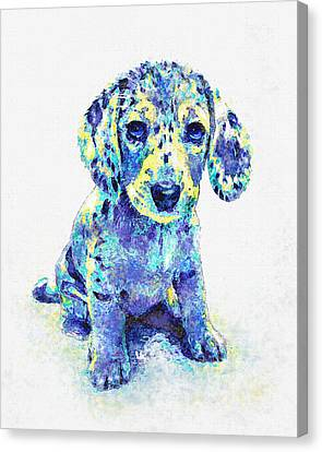 Blue Dapple Dachshund Puppy Canvas Print by Jane Schnetlage