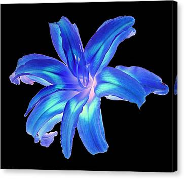 Canvas Print featuring the photograph Blue Day Lily #2 by Jim Whalen
