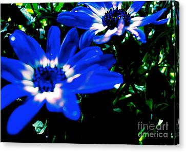 Blue Daze Canvas Print by Cathy Dee Janes