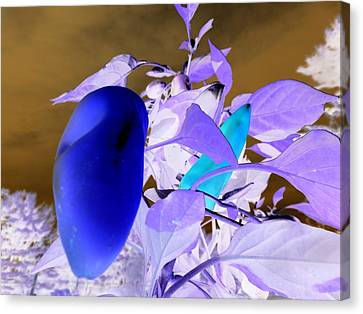 Canvas Print featuring the photograph Blue Delight by Mike Breau