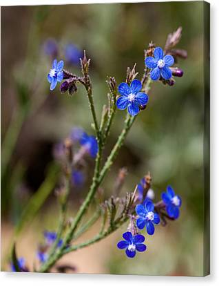 Canvas Print featuring the photograph Blue Delight by Uri Baruch