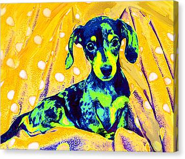 Blue Doxie Canvas Print by Jane Schnetlage