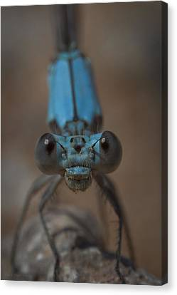 Blue Dragonfly Canvas Print by Megan Check