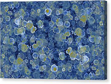 Blue Drip Canvas Print by Frank Tschakert