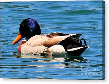 Blue Duck Canvas Print by Tap On Photo