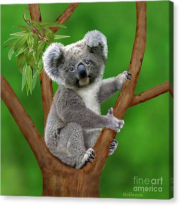 Blue-eyed Baby Koala Canvas Print by Glenn Holbrook