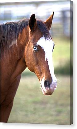 Canvas Print featuring the photograph Blue Eyes by Gordon Elwell