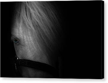 Blue Eyes Canvas Print by Shane Holsclaw