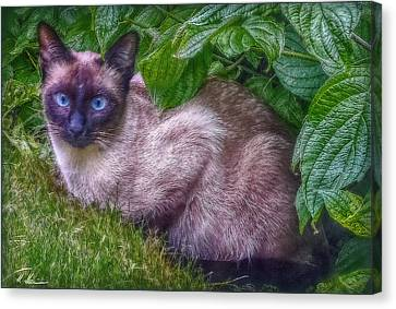 Canvas Print featuring the photograph Blue Eyes - Signed by Hanny Heim