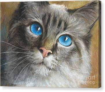 Blue Eyes Canvas Print by Tobiasz Stefaniak
