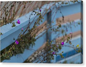 Blue Fence Purple Flowers Canvas Print by Scott Campbell