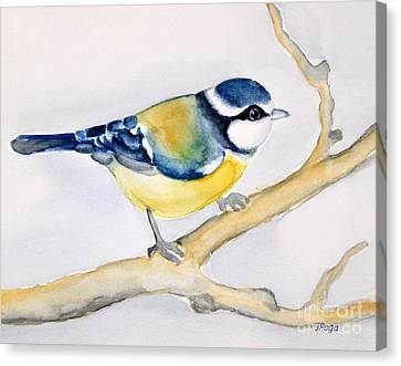 Blue Finch Canvas Print