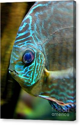 Digital Touch Canvas Print - Blue Fish - Digital Painting by Carol Groenen