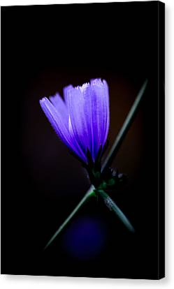 Blue Flame Canvas Print by Edgar Laureano
