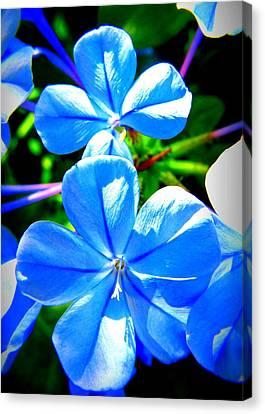 Blue Flower Canvas Print by David Mckinney