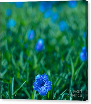 Blue Flower Canvas Print by Julian Cook
