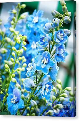 Blue Flowers Canvas Print by Antony McAulay
