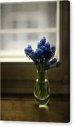 Blue Grape Hyacinth Flowers In The Glass Flowerpot Canvas Print