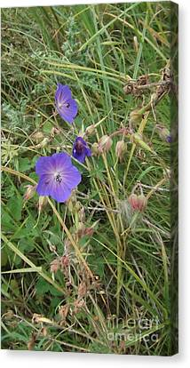 Blue Flowers Canvas Print by John Williams
