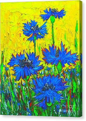 Blue Flowers - Wild Cornflowers In Sunlight  Canvas Print by Ana Maria Edulescu