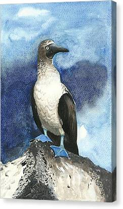 Blue Footed Booby Bird On A Rock Canvas Print by Shweta  Mahajan