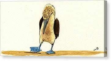 Seabird Canvas Print - Blue Footed Booby by Juan  Bosco