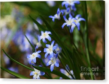 Blue For You Canvas Print by Neal Eslinger