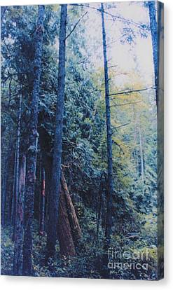 Blue Forest By Jrr Canvas Print by First Star Art