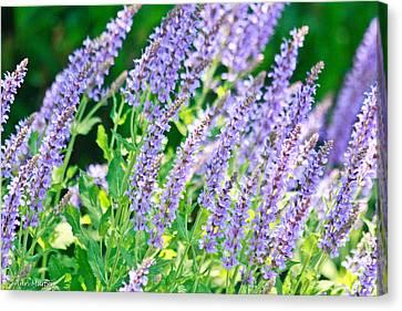 Blue Fortune Flower Spikes Canvas Print