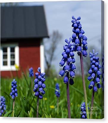 Canvas Print featuring the photograph Blue Garden Flowers by Kennerth and Birgitta Kullman