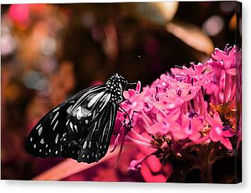 Blue Glassy Tiger Butterfly Canvas Print by Marianna Mills