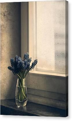 Blue Grape Hyacinth Flowers At The Window Canvas Print by Jaroslaw Blaminsky