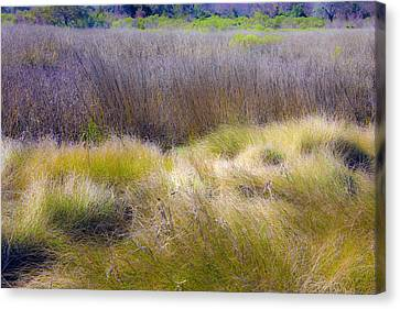 Canvas Print featuring the photograph Blue Grass by Paula Porterfield-Izzo