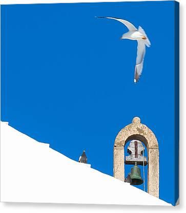 Blue Gull Canvas Print